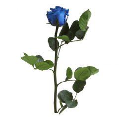 Dobozos örökrózsa - Kék